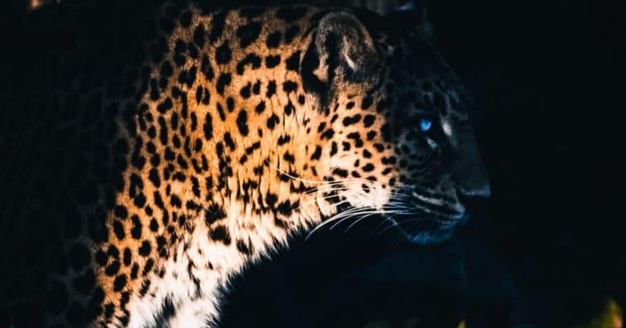 Yggdrasil Ortakları ReelPlay, Jaguar SuperWays'i Bad Dingo'dan Çıkaracak